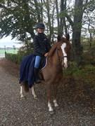 Hest til salg - VALØR