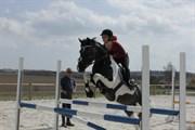 Hest til salg - BUNDGAARDS CHESS