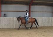 Hest til salg - CORINE