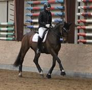 Hest til salg - A LARMING MAGIC