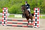 Hest til salg - NETSTUTTERIETS MOONLIGHT