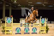 Hest til salg - LATHYRUS