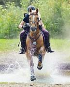 Hest til salg - KLEPHOLMS VENUS