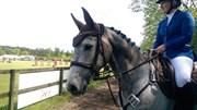 Hest til salg - LAUCO