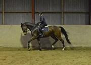 Hest til salg - Da Rondo