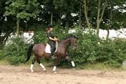 Hest til salg - CHREVI´S LAIKA