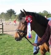 Hest til salg - Lundemarksgårds O´Malley