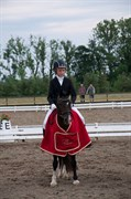 Hest til salg - GRIBSVADS MAGI