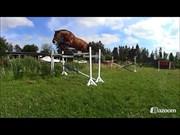 Hest til salg - KRONBORGDIGES FLIKA
