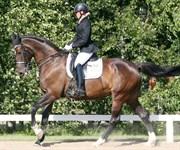 Hest til salg - MICHELLINE