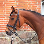 Hest til salg - REBA