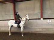 Hest til salg - RONALDO