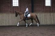 Hest til salg - CARPE DIEM