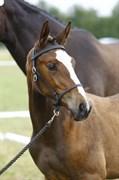 Hest til salg - SØLBECKS LA PARFAIT