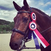 Hest til salg - San Rubinho