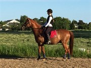 Hest til salg - ELDARION TELCONTAR TT