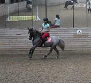 Hest til salg - Colt