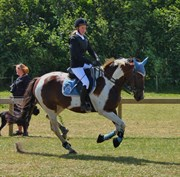 Hest til salg - SELINA