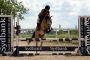 Hest til salg - SKOVENGENS SIR BAILEY