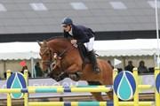 Hest til salg - CAPACITY WILD FLOWER