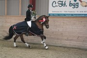 Hest til salg - STEGSTEDGÅRDS DUSTY