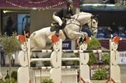 Hest til salg - OFFELBAR (SWB)