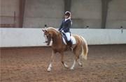 Hest til salg - WINDOW