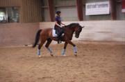 Hest til salg - MICKI-DEE