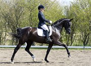 Hest til salg - LANGDYSSEGÅRD'S NOBLI