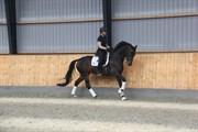 Hest til salg - DIOR HORSEWELL