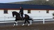 Hest til salg - GEDEVASEGAARDS AVATAR