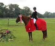 Hest til salg - NERLE