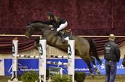Hest til salg - CAPONE