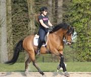 Hest til salg - RØGILD´S KILIMANJARO