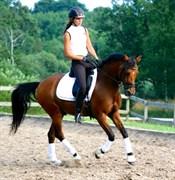 Hest til salg - RØGILD´S RAS HAFUN