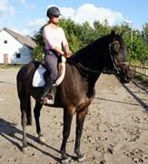 Hest til salg - OSAGERS RAMANT