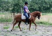 Hest til salg - Clausholm Jupiter