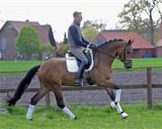 Hest til salg - HEIDE LIFE
