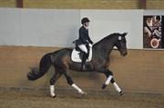 Hest til salg - SVALEGÅRDS DESTINY