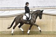 Hest til salg - 484 - SILHOUET