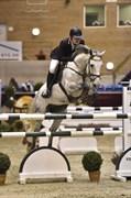 Hest til salg - ZIRONIEK