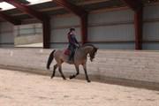Hest til salg - LEANDRUS ALFALINO