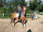Hest til salg - ANABELL