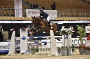 Hest til salg - TAQUITA BANANA