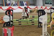 Hest til salg - COLLIGAN´S B J