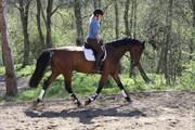 Hest til salg - GRAF'S PRINCESS ANAYA