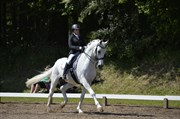 Hest til salg - SHADOWFAX