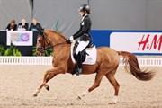 Hest til salg - Danny Beau