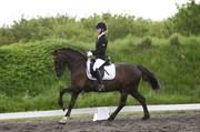 Hest til salg - ROLO