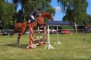 Hest til salg - RØDE LEIF
